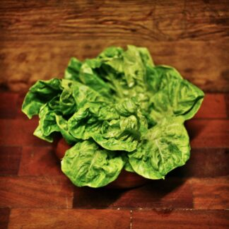 Lettuce - Little Gem (each)