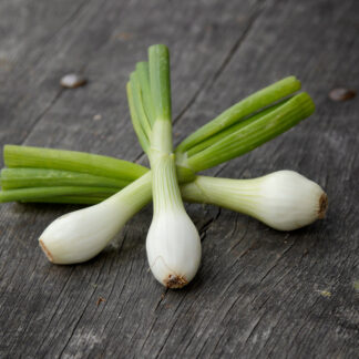 Spring Onion (bunch)