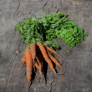 Carrot Bunch (UK Grown)